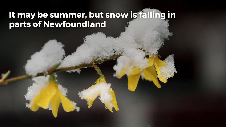 Summer Snow Falls In Parts Of Newfoundland