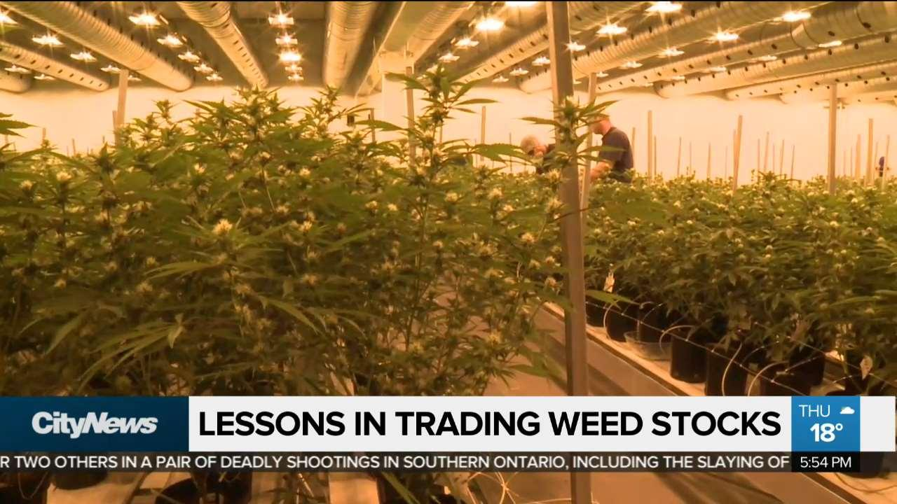 10 things I learned trading weed stocks as a rookie investor