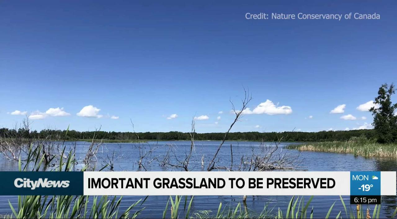 Grasslands home to at-risk species to be preserved