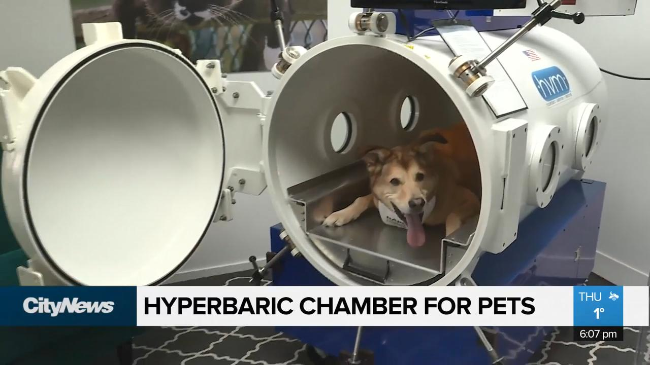Hyperbaric oxygen chamber for pets