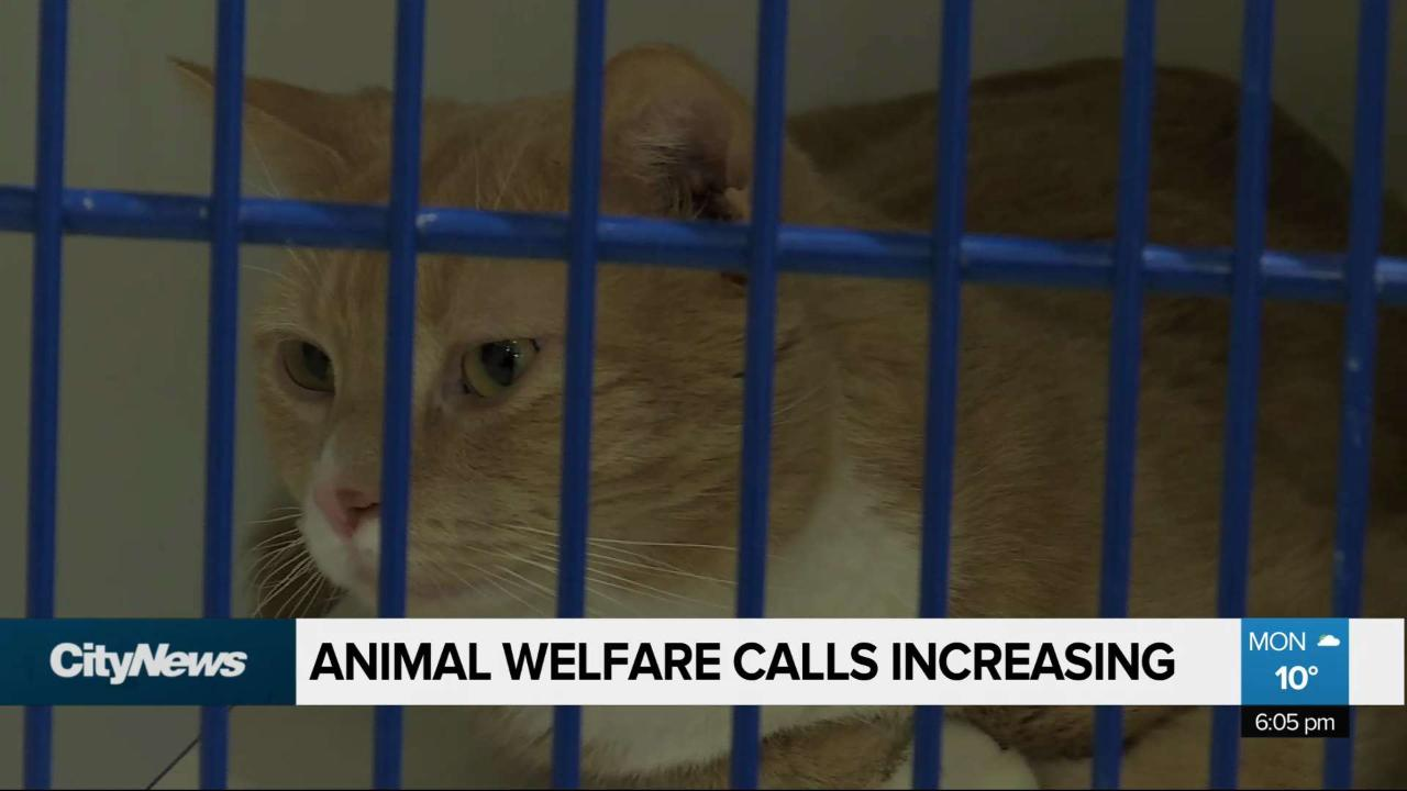 The Winnipeg Humane Society sees increase in calls