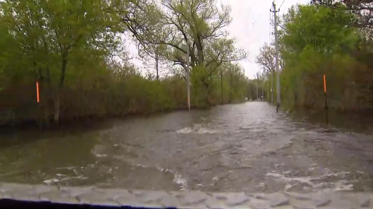 Fish swims across flooded roadway on Toronto Islands