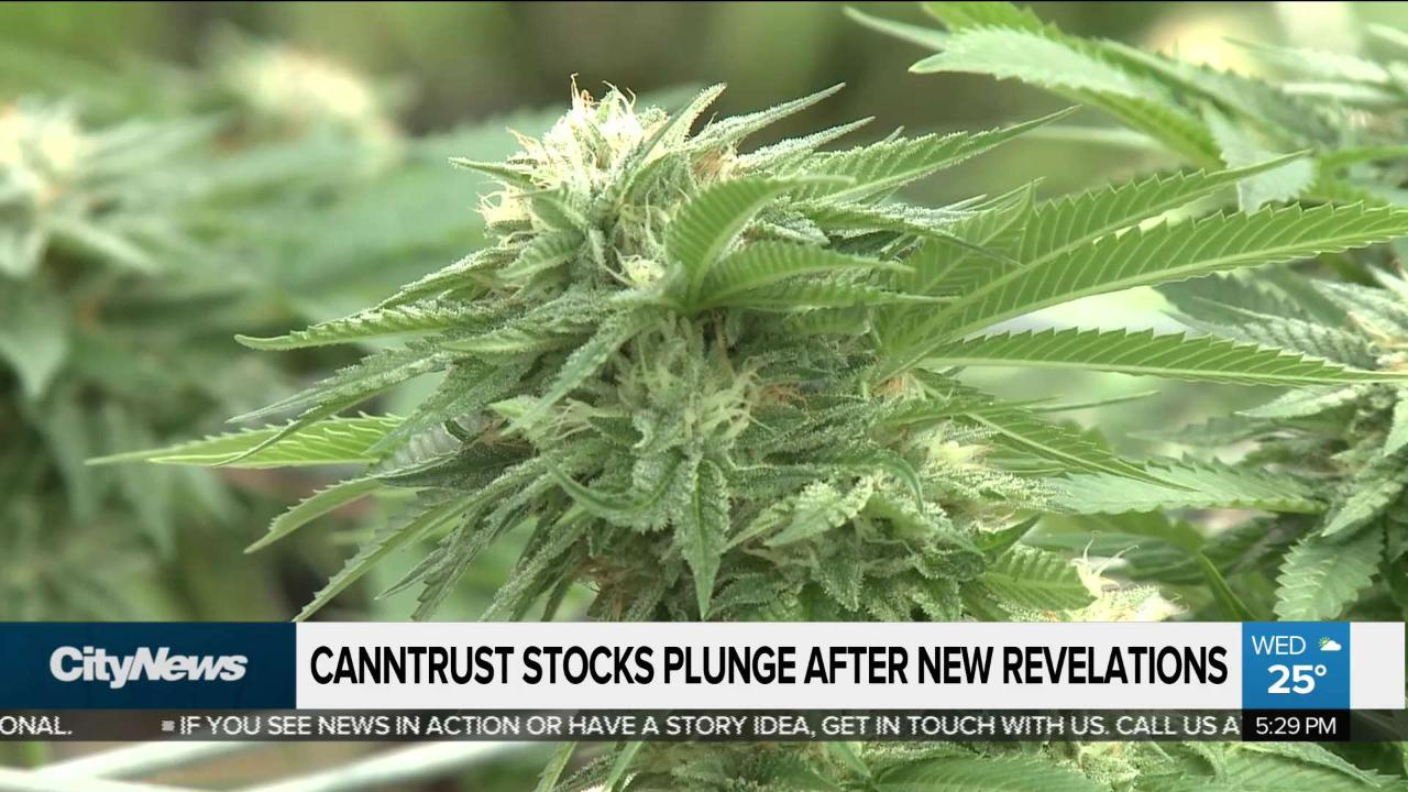 3a4b1d2e Canntrust stock plunges further after new allegations