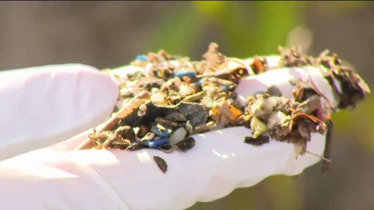 Plastic pellet pollution on our shores