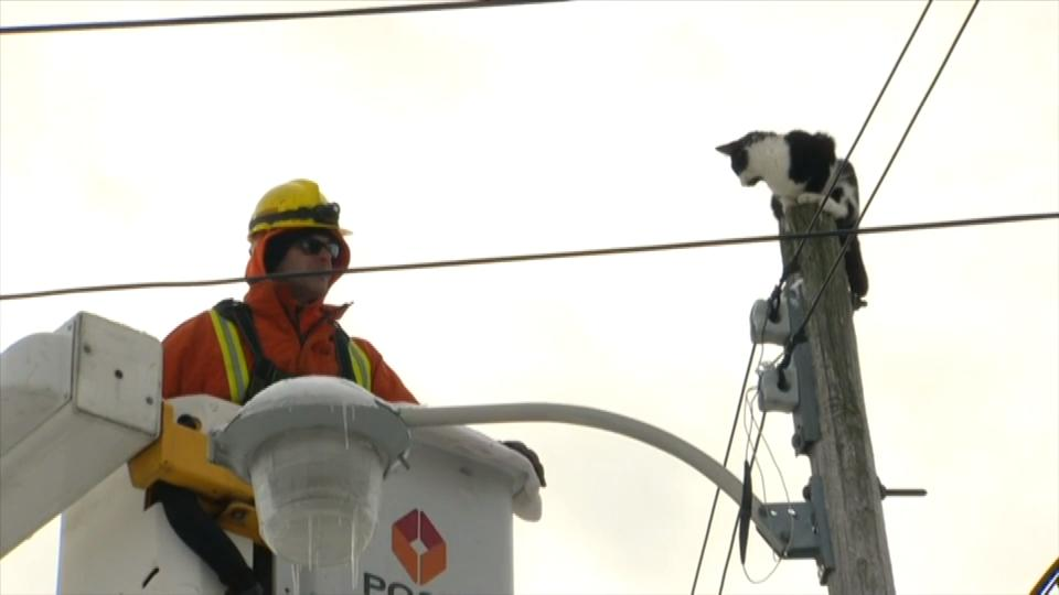 Toronto Hydro Rescues Cat Stuck On Top Of Pole Overnight