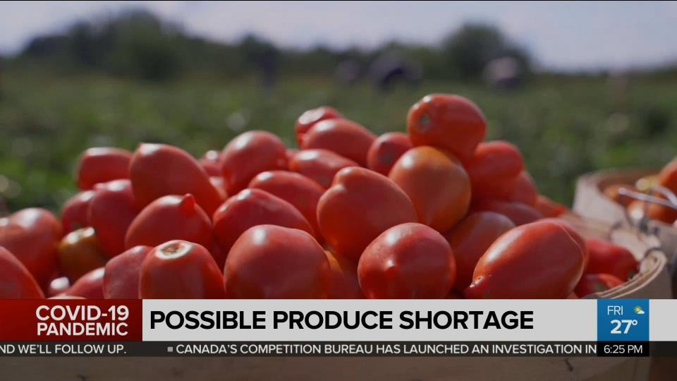 Possible tomato shortage this summer - CityNews Toronto